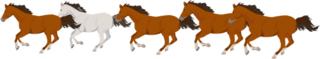 馬5頭加工画像.png.png